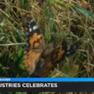 Lott Industries celebrates anniversary with butterflies Image